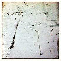 Spider Web Looks Like Jack Skeleton from Nightmare Before Christmas