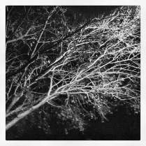 Tree Branches at Night During Florida's Winter Months